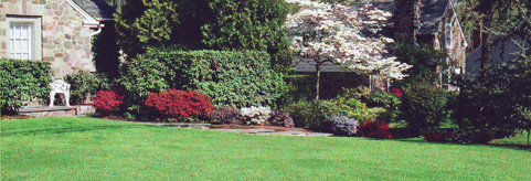 Landscape & Tree Services in Massachusetts