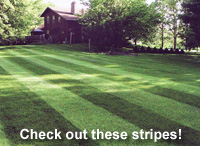 Check out these stripes!